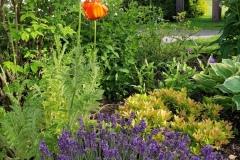 Garten_Sommer_Blume